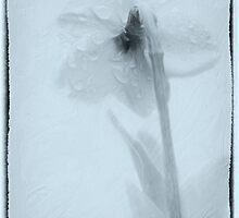 April Showers And The Daffodil by Diane Schuster