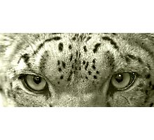 Snow Leopard Eyes Photographic Print