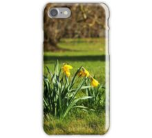 The Daffodils are out iPhone Case/Skin