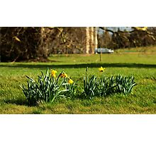 The Daffodils are out Photographic Print