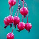 Candy.  by Sherstin Schwartz