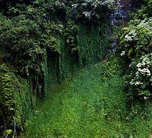 Maui  by olivia destandau
