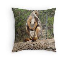Yellow footed Rock Wallaby at Monarto Zoo. Throw Pillow