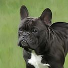 Frodo the French Bulldog by Cazzie Cathcart