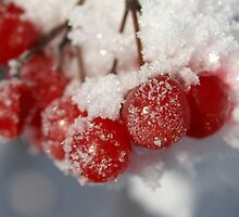 frosted berries by Fran E.