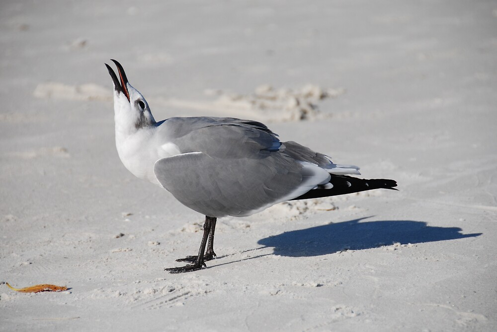 Gull making a right din! by Barry Goble