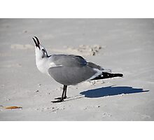 Gull making a right din! Photographic Print