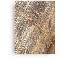 Nature's Ribbon and Bow Canvas Print