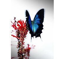 Flutterby Photographic Print