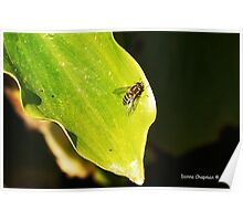 Wasp On A Leaf Poster