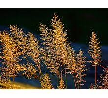 Bushveld Grass Photographic Print
