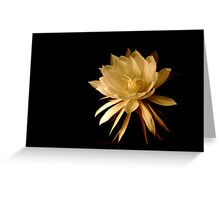 ~Queen of the Night (Cereus)~ Greeting Card