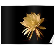 ~Queen of the Night (Cereus)~ Poster