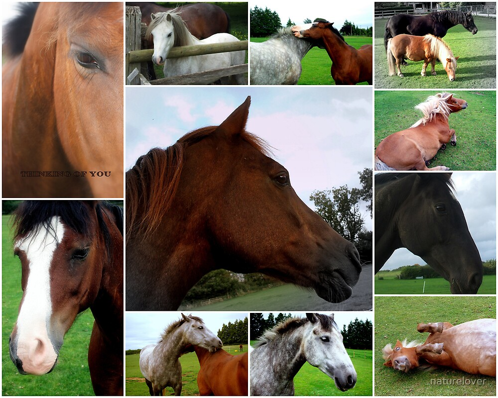 Collage Of Horses by naturelover