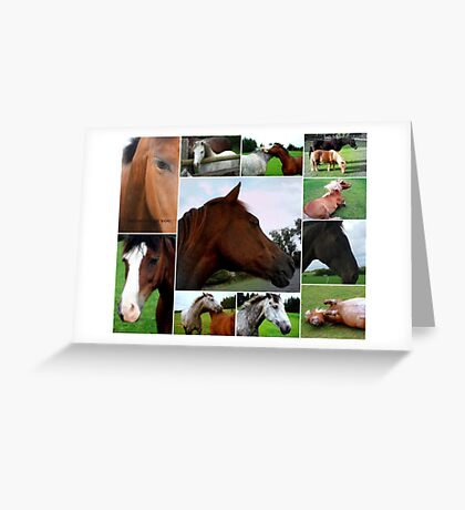 Collage Of Horses Greeting Card