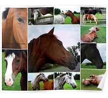 Collage Of Horses Poster