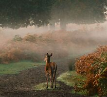 Alone in the Mist by Carol Saunders