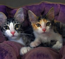 Kittens in a Purple Bed by Catherine Sherman