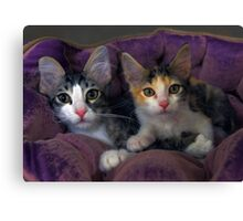 Kittens in a Purple Bed Canvas Print