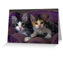 Kittens in a Purple Bed Greeting Card