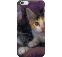 Kittens in a Purple Bed iPhone Case/Skin