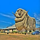 We Grow Our Sheep Big Downunder - The Big Merino Goulburn NSW, The HDR Experience by Philip Johnson