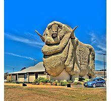 We Grow Our Sheep Big Downunder - The Big Merino Goulburn NSW, The HDR Experience Photographic Print