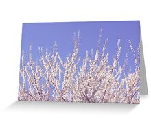 Reach for the Sky (Sakura Series I) Greeting Card