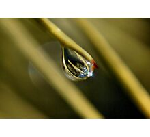 with the drop of a needle Photographic Print