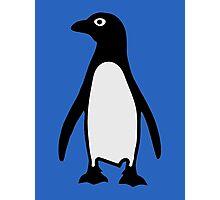 Penguin bird Photographic Print