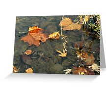 """Fall Colors """"Floating"""" Greeting Card"""
