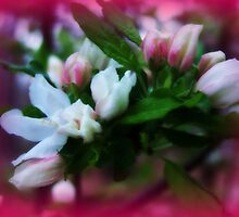 Spring Blossoms by Lisa Taylor