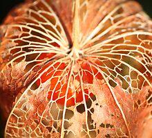 Chinese Lantern Seed  by Pamela Jayne Smith