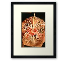 Chinese Lantern Seed  Framed Print