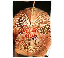 Chinese Lantern Seed  Poster