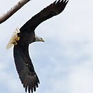Soaring Eagle  by Bonnie T.  Barry