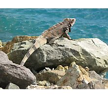 Girls Iguana have fun :) Photographic Print
