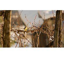 Bird on vineyard Photographic Print
