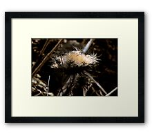 Bloom and Bust in the Organic World Framed Print