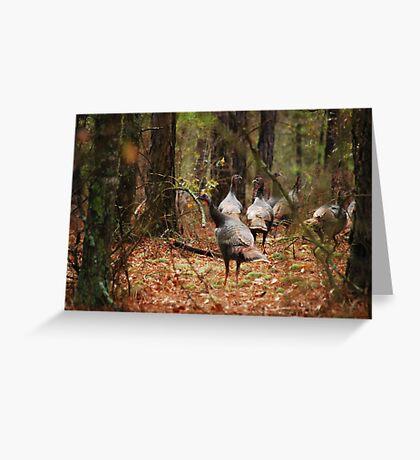 Turkeys Greeting Card