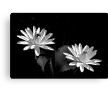 Two Water Lilies, In Black and White Canvas Print