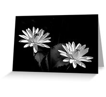 Two Water Lilies, In Black and White Greeting Card