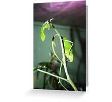 Leaf Bug 1 Greeting Card