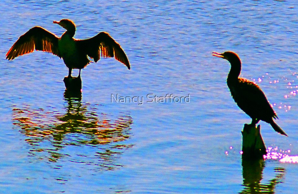 Spreading the Wings.. Anyone for a guess what kind of bird? solved it a cormorant by Nancy Stafford