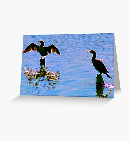 Spreading the Wings.. Anyone for a guess what kind of bird? solved it a cormorant Greeting Card