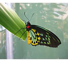 Butterfly Wings Photographic Print