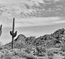 Dreaming Arizona by Adam Kuehl