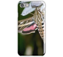 Drinking from Hosta Flowers iPhone Case/Skin