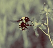 Bumble Bee by Darion Tinklenberg