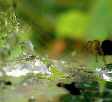 Little World Of A Tiny Spider by Mojca Savicki